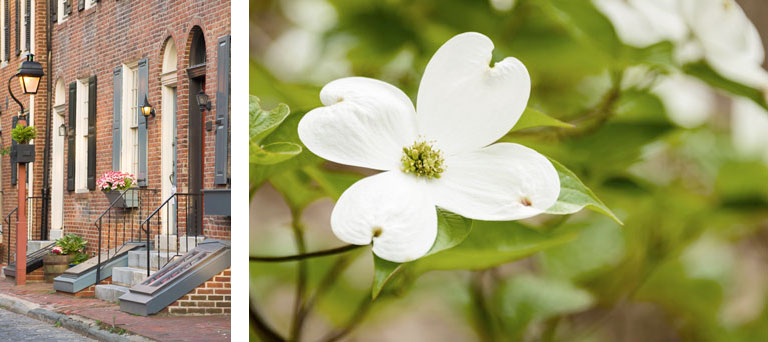 The outside of a brick building with grey shutters & a separate image of a white flower.