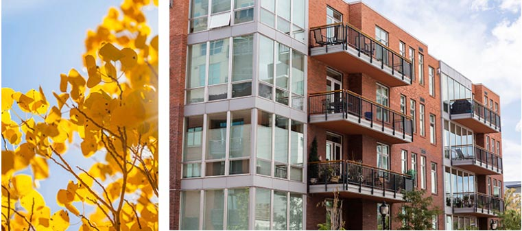 Yellow leaves on branches & a separate image of a brick multi-story building with balconies.